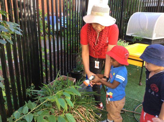 Preschool and Gardening
